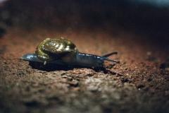 North Hollywood Snail